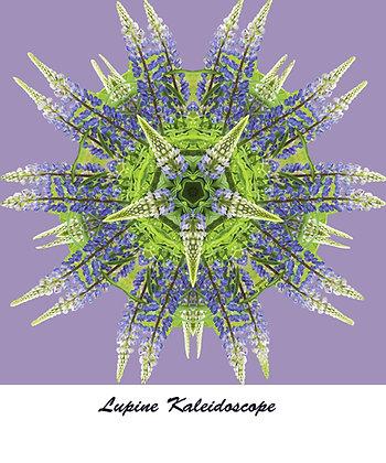 Lupine Kaleidoscope T Shirt