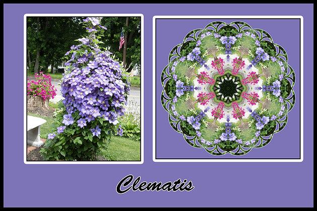 Clematis, Photograph