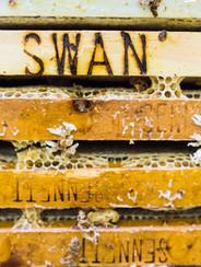 Swans Honey