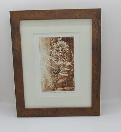 """Monarch Caterpillar"" Solar Plate Framed Etching by Artisan Sandi Cirillo"