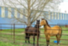 Horses and Fence.jpg