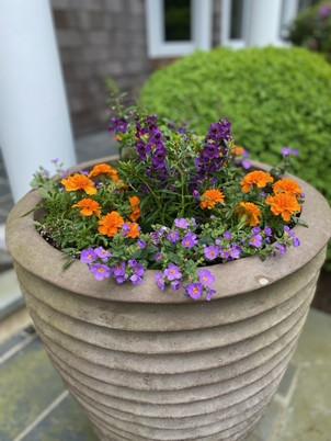 Flower Pot Design & Maintenance - 12