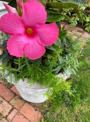 Flower Pot Design & Maintenance - 13