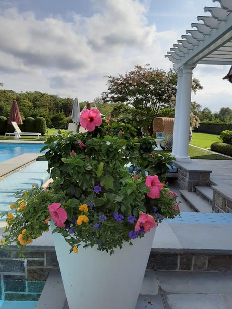 Flower Pot Design & Maintenance - 11