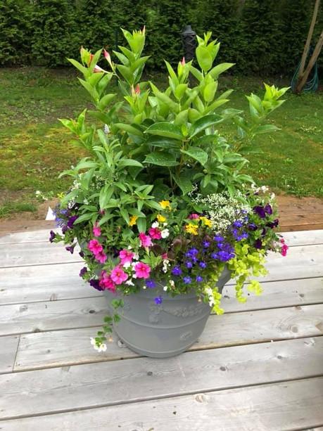 Flower Pot Design & Maintenance - 05