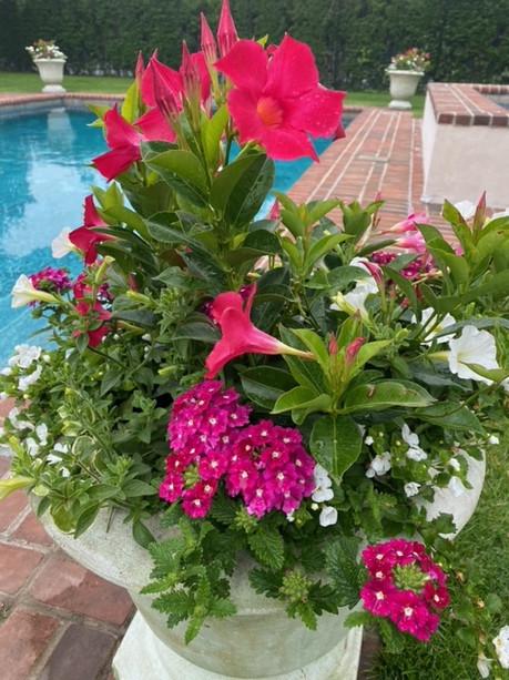 Flower Pot Design & Maintenance - 10