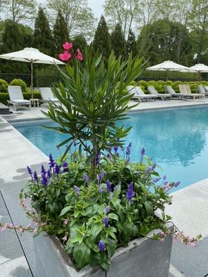 Flower Pot Design & Maintenance - 09