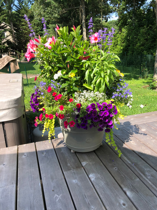Flower Pot Design & Maintenance