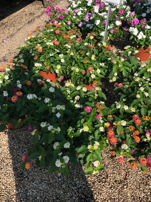 Flower Pot Design & Maintenance - 07