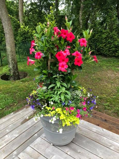 Flower Pot Design & Maintenance - 06