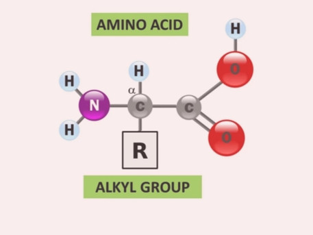Formation of amino acid in plant .