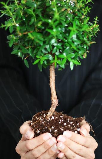 GROW redovisning & utveckling