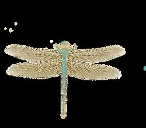 Färg dragonfly.png