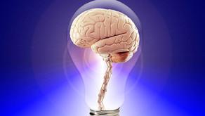 심리학 이야기 5 - 인지심리학 개괄