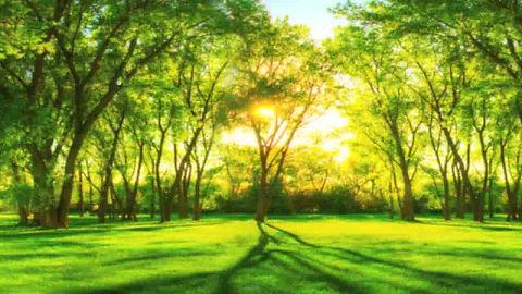 Une méditation pour se relier à l'énergie du printemps : purification du corps/esprit, renouveau et croissance intérieure. en médecine traditionnelle chinoise, le printemps est relié au foie et ses émotions, et à l'élément Bois. Bonne pratique !