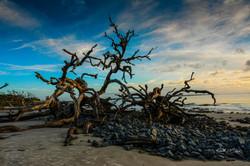 Driftwood beach Jekyll Island-1