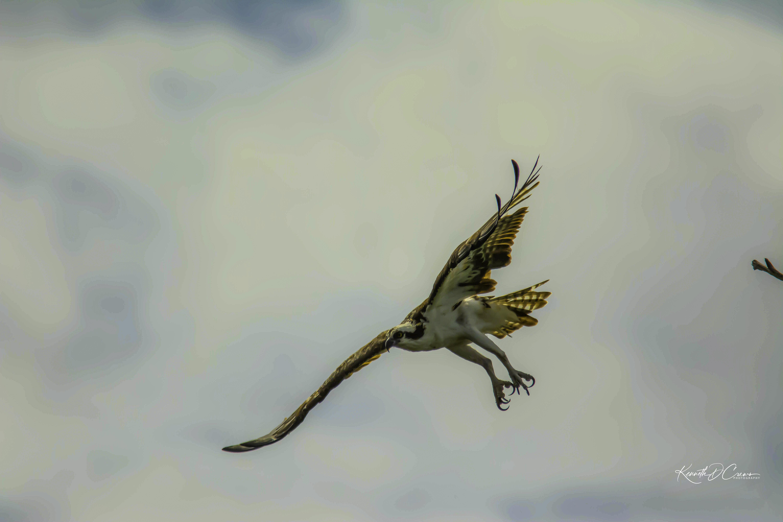 Osprey2-1
