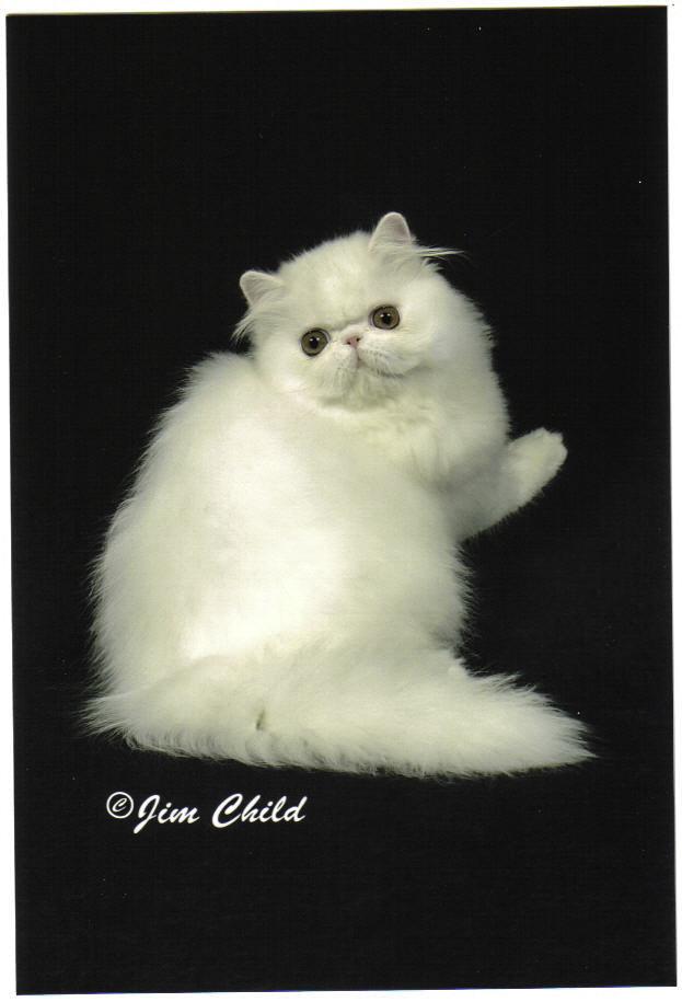 Cat2 - Miracle.4mo.-1