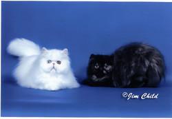 Cat5 - sissyandtortie-1