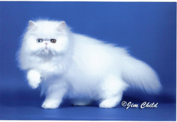 Cat3 - Sissy-1