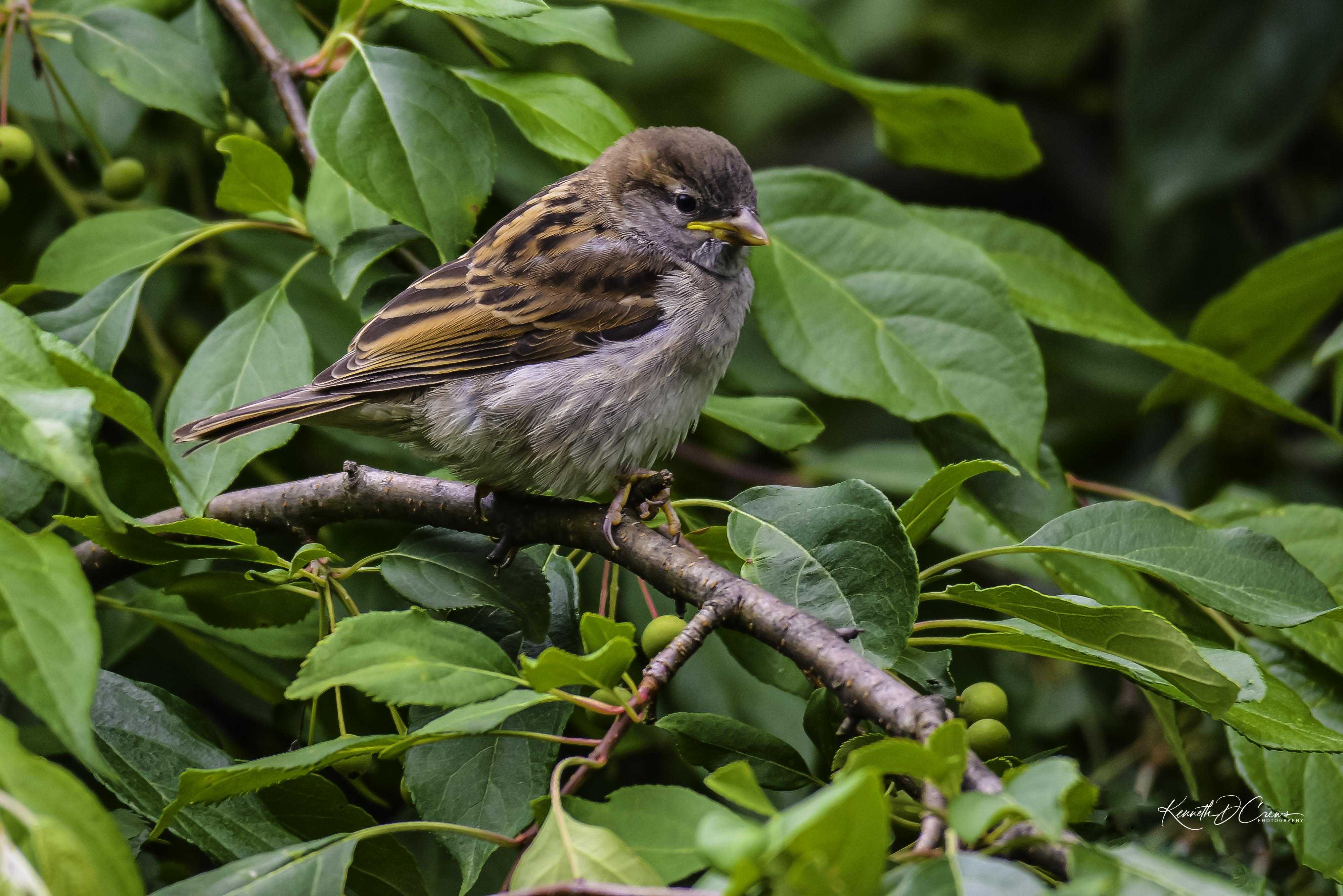 Sparrow - house-1