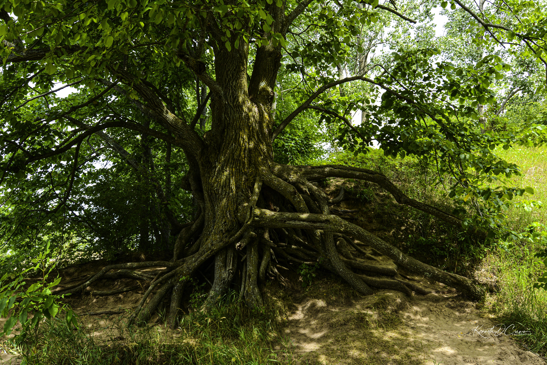 gnarly tree2-1-1-1