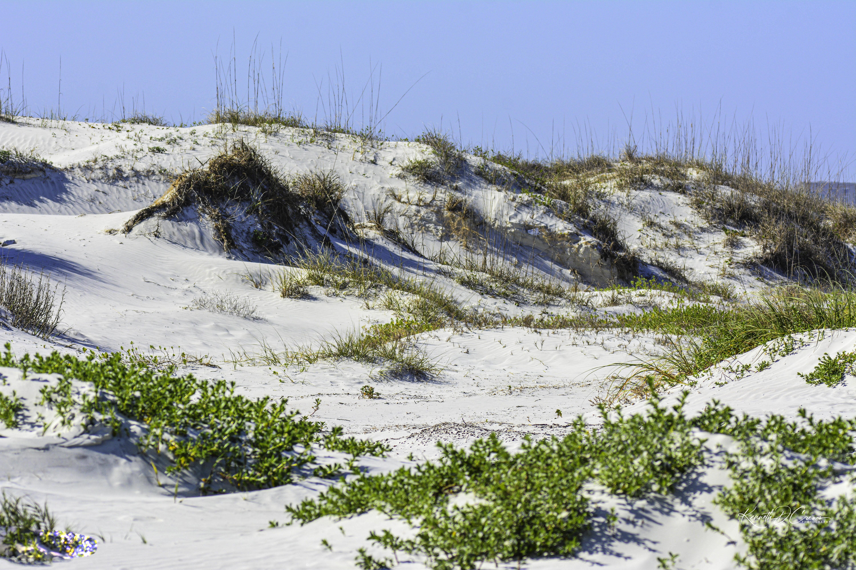Dunes-1-1