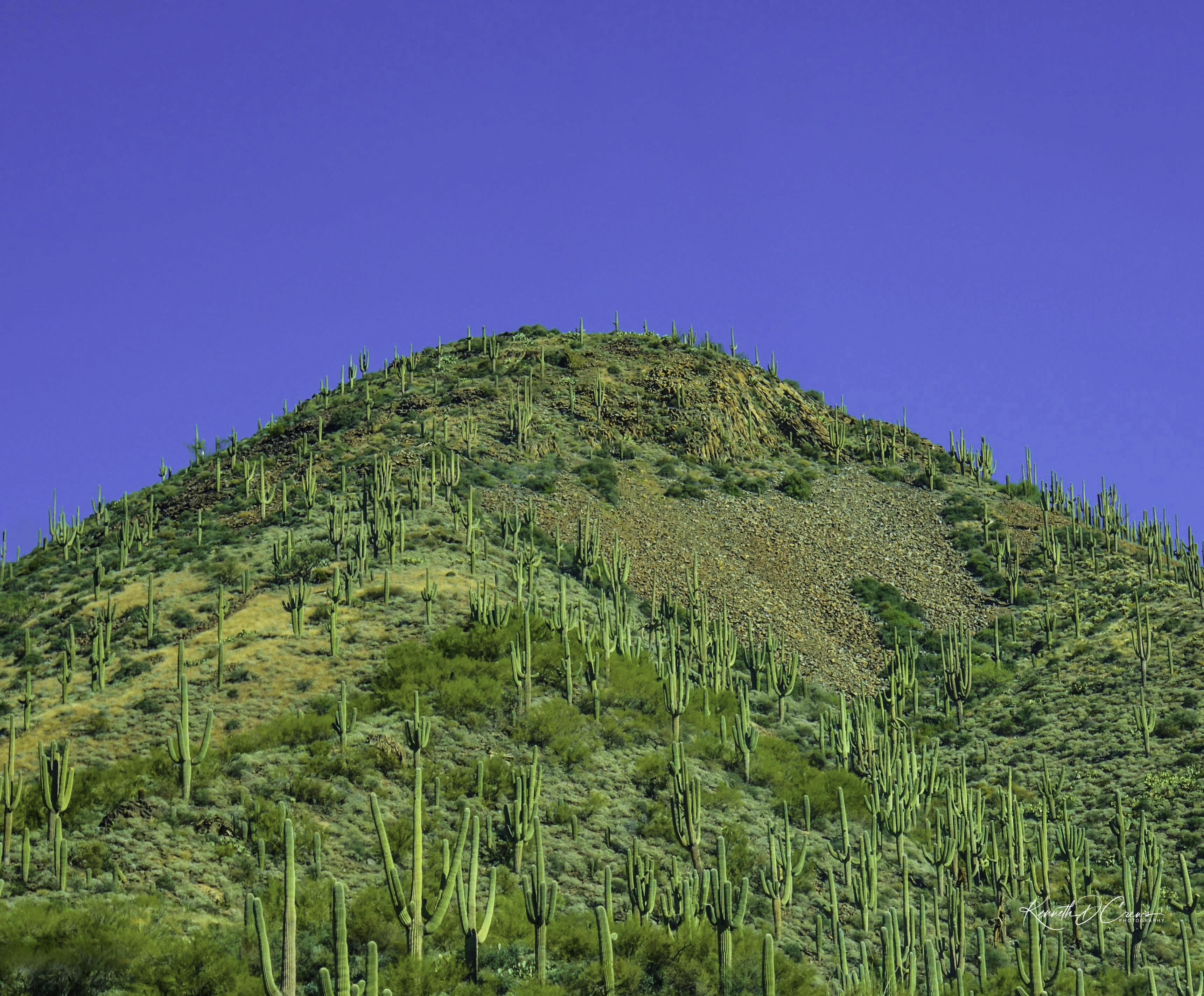 Cactus Mountain Arizona-1-1