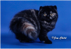Cat4 - tortie-1-1