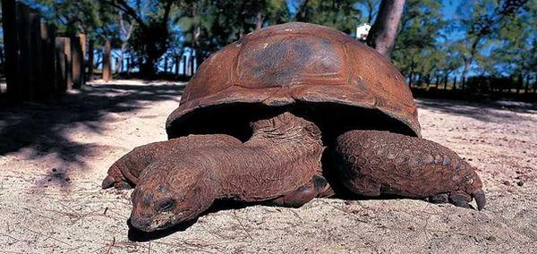 prison island turtle1.jpg