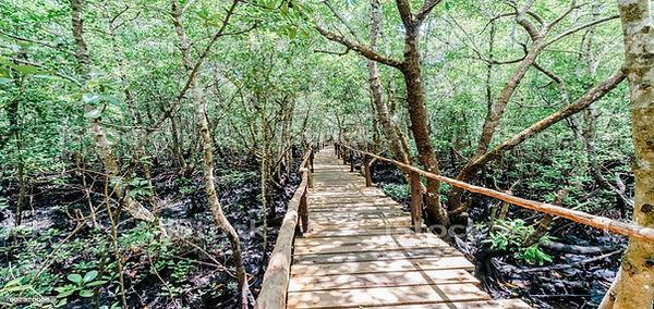JOzani Forest Tour 2.jpg