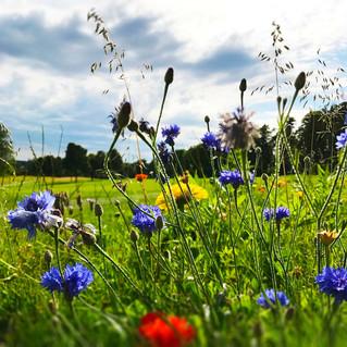 Natur-Blumen-Much-1.jpg