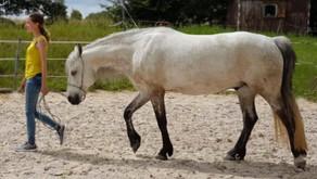 """Seminar """"Werde zum Leittier Deines Pferdes""""  (Nähe Augsburg)"""