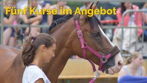 Pferdeschutzengel bietet: Fünf Kurse im Angebot