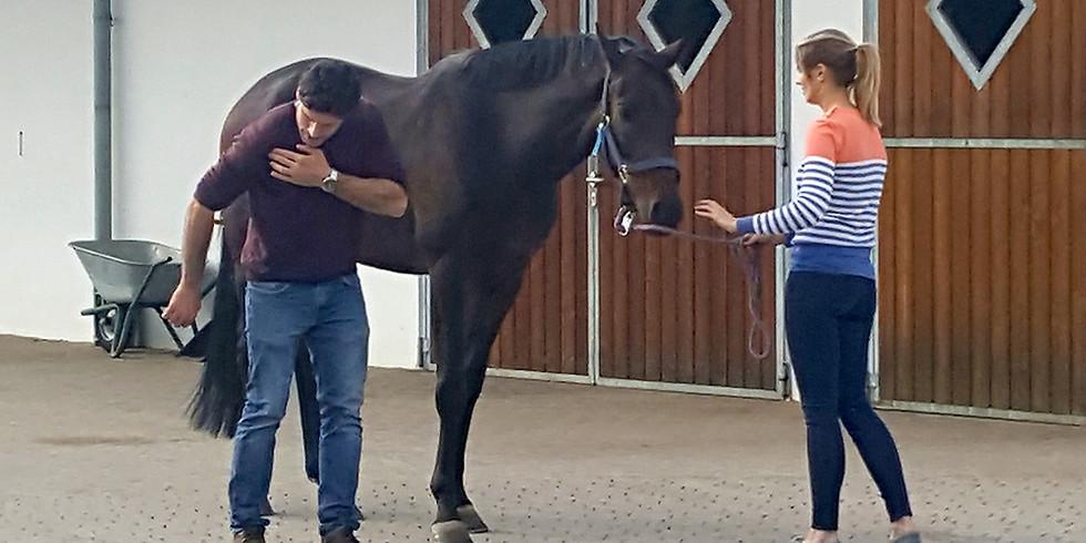 (PM) Erste Hilfe für Pferde