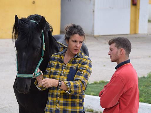 Pferdemanager werden