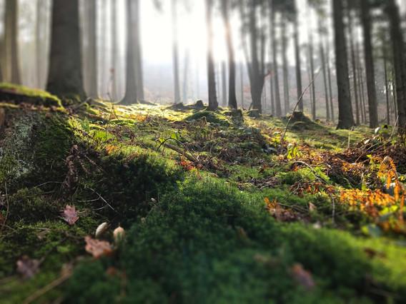Wald-Much 2.jpg