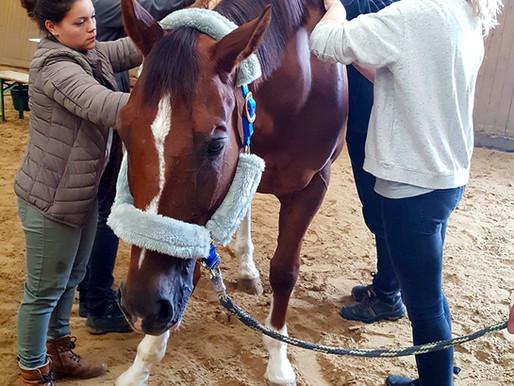 "Workshop ""Hilfe zur Selbsthilfe - Pferde selbst behandeln"""