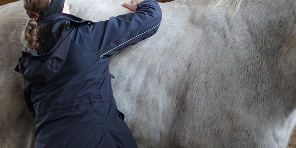 """Webinar-Reihe """"Raus aus der Trageschwäche"""" Teil5  Therapie-Stufenplan bei Trageschwäche """"So helfen Sie Ihrem Pferd raus"""