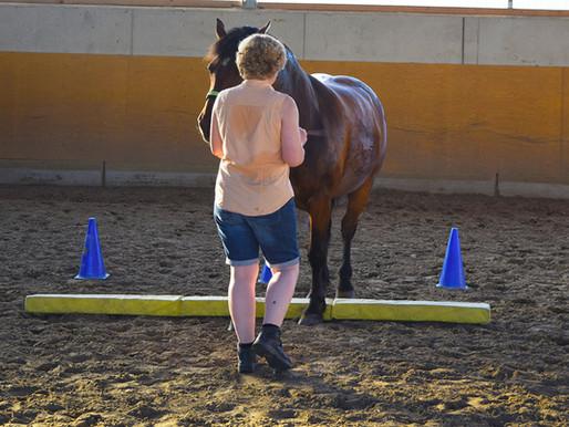 Pferdegesundheitstrainer werden