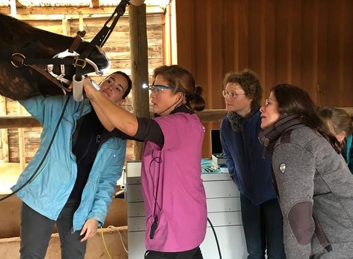 Equo Vadis – das Lehrinstitut für ganzheitliche Pferdegesundheit seit 2005
