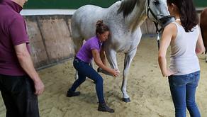 Osteopathischer Pferdefachtherapeut werden