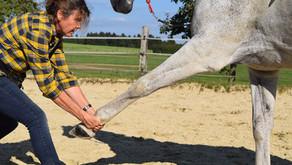 Beratung, Therapie und Trainingsanleitung für Dich und Dein Pferd.