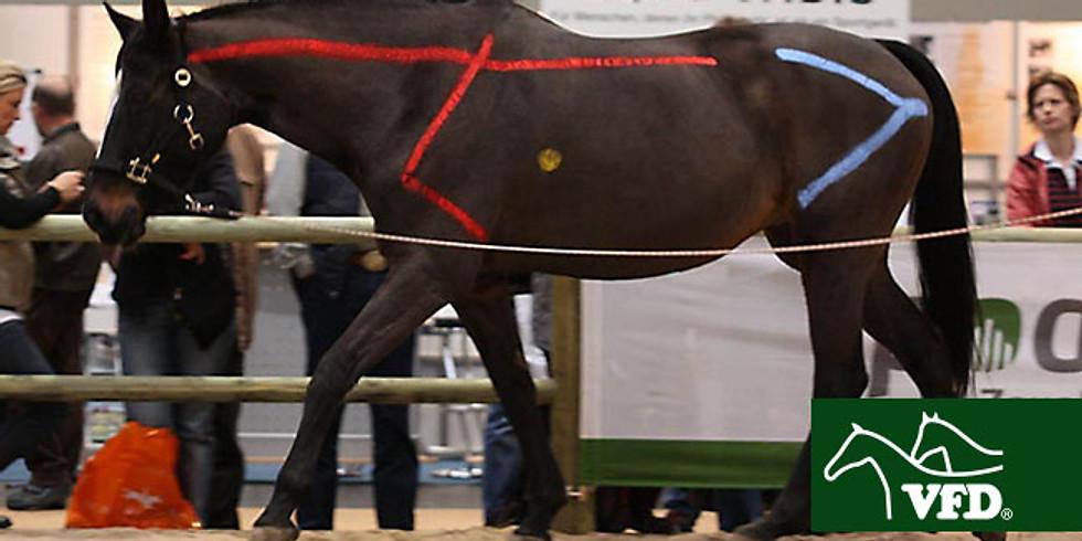 1.Bewegungslehre Pferd und Mensch/Exterieurbeurteilung und vertiefende Biomechanik