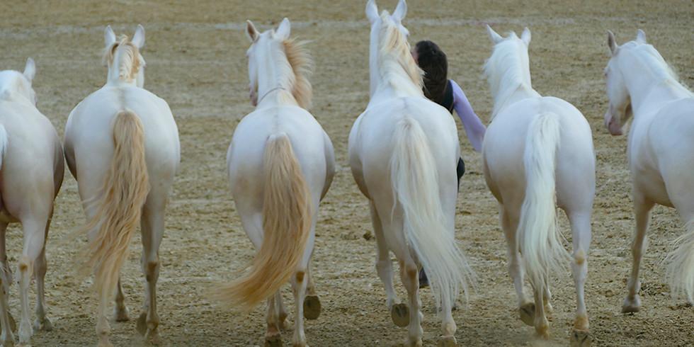 (PGT) Freiarbeit | Körpersprachenschulung als Grundlage der Kommunikation mit dem Pferd | Einführung Arbeit an der Hand