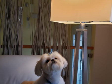 Effects of Light on Pets - Part 1 - Dogs, Lighting and Flicker