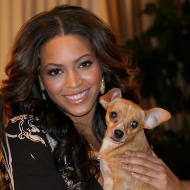 Beyonce & my dog Paco