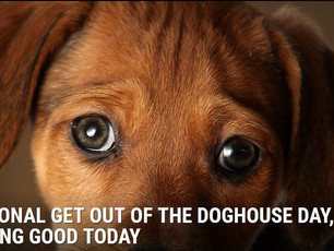 Get out of the Doghouse with Ellis Knox' Talysse and Jacqueline Simonds - Retired Writer in the