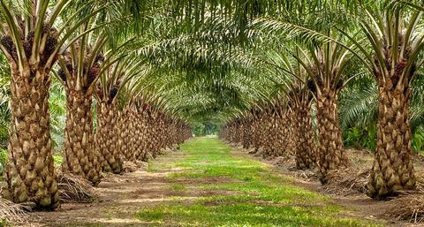 Check Your Ingredients! What You Need to Know About Palm Oil