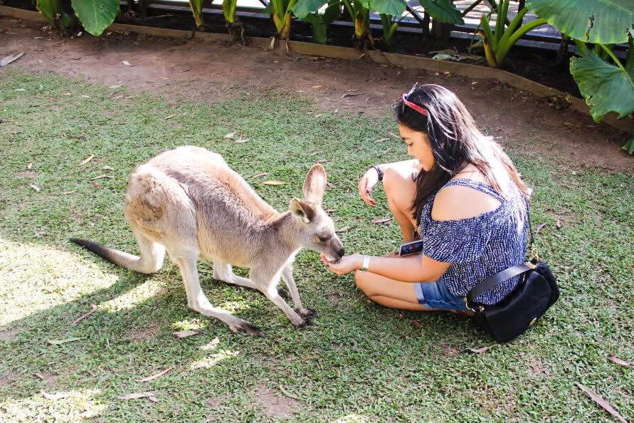 Kangaroo Whisperer